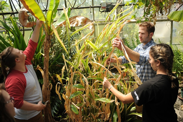Male professor working with two students in the greenhouse