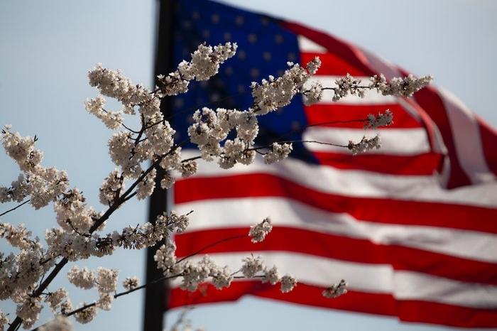 American flag behind a flowering tree