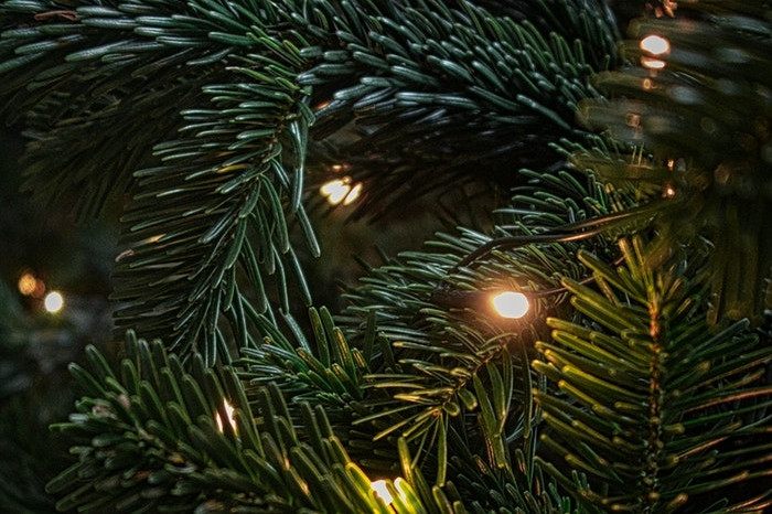 Close-up of a Christmas tree and lights