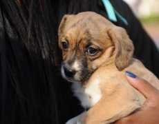puppy being held