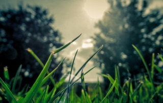 nature and grass
