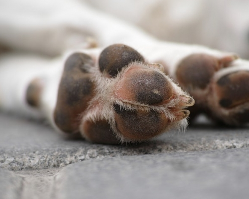 Close up of a dog's front paws