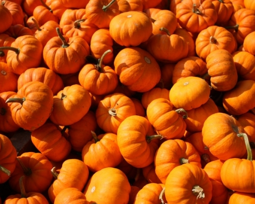 Bunch of small pumpkins