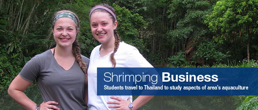 shrimping-business
